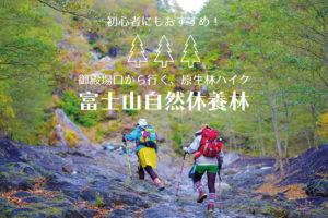 御殿場口から行く原生林ハイク</br>富士山自然休養林おすすめコース