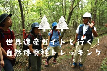 世界遺産ガイドと行く!<br>自然休養林トレッキング