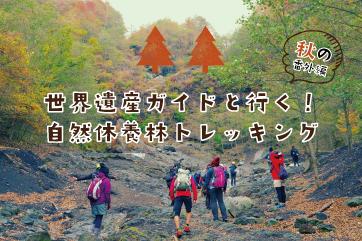 世界遺産ガイドと行く!自然休養林トレッキング 秋の番外編