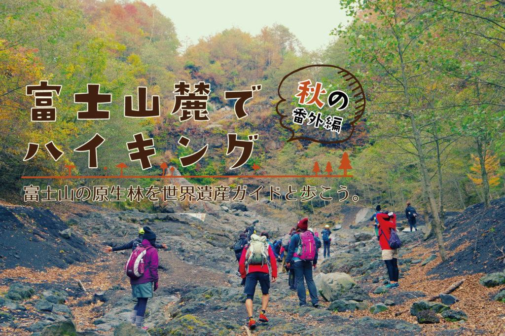 富士山麓でハイキング 富士山の原生林を世界遺産ガイドと歩こう。 秋の番外編